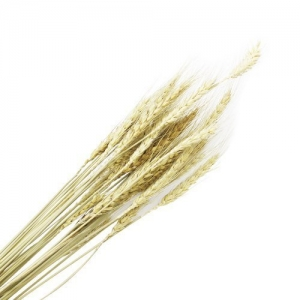 Пшеница декоративная