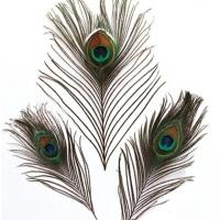 Перья павлиньи